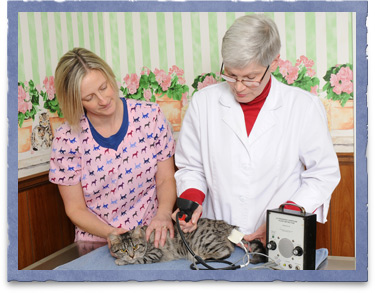 Blood Pressure Monitoring for Pets
