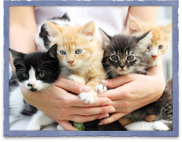 Reproductive Medicine for Breeding Your Pet