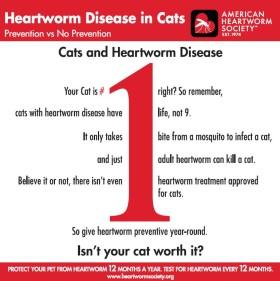 Feline Spring Safety Tips - Community Animal Hospital Blog