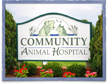 Community Animal Hospital in Easton, MD